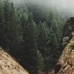 Okładka Nature