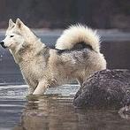 Okładka Dogs ♡