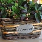 Okładka Osłony wiklinowe na kwiaty