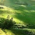 Okładka Green