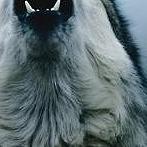 Okładka BE WOLF