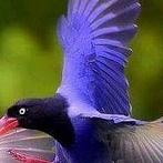 Okładka Kolorowe ptaki