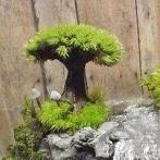 Okładka Bonsai