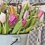 Okładka Spring