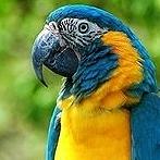 Okładka Gatunki ptaków