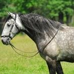 Okładka Rasy koni