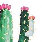 Okładka Kaktusy