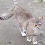 Okładka Moje Koty♡