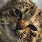 Okładka Koteły