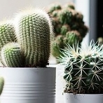 Okładka Rośliny