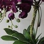 Okładka Orchidea