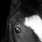 Okładka konie,kucyki
