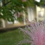 Okładka Kwiaty i bukiety