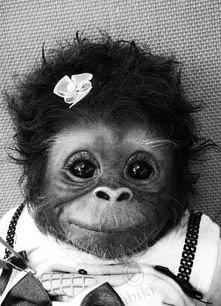 małpka <3