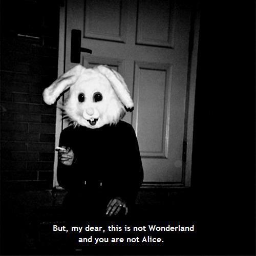 Serwis randkowy Wonderland