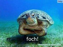 haha foch :D