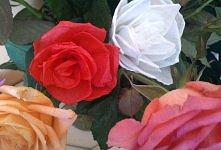 róże z bibuły, xxx