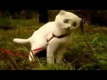 KITTY - dziwny kot;)