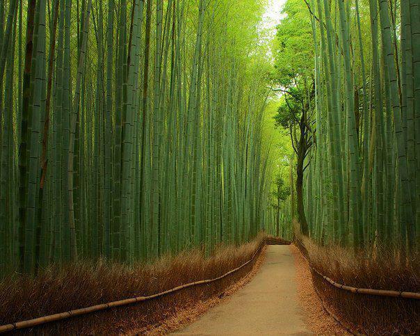 Las Bambusowy, Kyoto Japonia