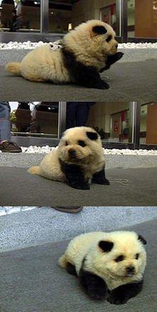 pies panda *.*