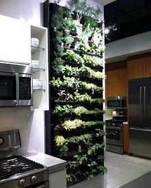 Kuchnia i doniczki na zioła