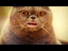 Śpiewający kot z Rosji -  Salvador singing cat. <br> Czekajcie do 43 sek, będzie ekstra, mój mózg zaciął topić się:)