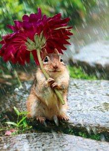 deszcz...