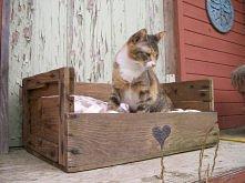 legowisko dla kotka