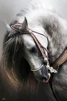 Biały Koń   <3