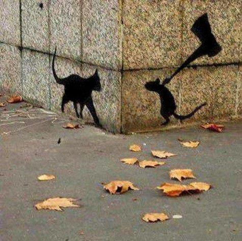 Kot I Mysz Na Smieszne Zdjecia Zszywkapl