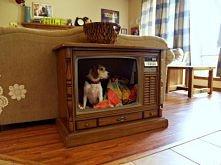 Pies w telewizorze.