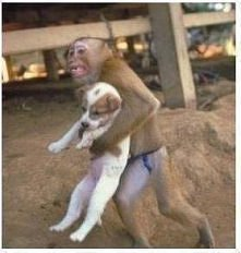 """""""During a dangerous factory explosion that occurred in china, a monkey was recorded on the camera saving a puppy from the explosion site. he held the dog as he ran out of t..."""