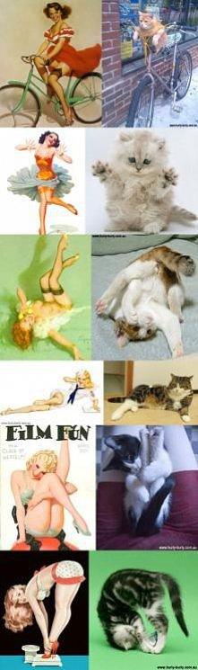 Pin-up Cats ;D