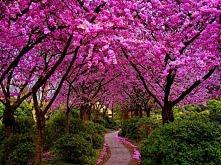 wiosna w różnej postaci