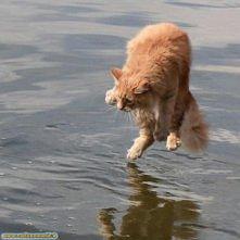 Chodzący po wodzie :D