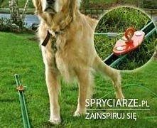 szyna ogrodowa dla pupila