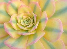 niezwykły kwiatek