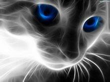 Najnowsze Inspiracje Z Wwwtapeta 3d Kot Siersc Niebieskie Oczyna