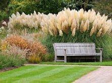 Ozdobne trawy