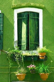 zielone okienko