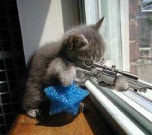 ah te myszy...!
