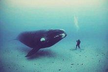 underwater.