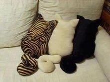 Kocie poduszki