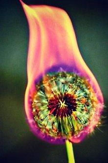 dmuchawiec w ogniu