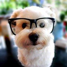 main streem & the Dog