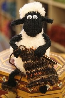 czarna owieczka ;)