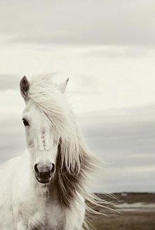 <3 białe konie są śliczne