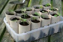 mozna pozniej rosline z kartonem wsadzic do ziemi. bo karton jest ekologiczne i sam sie rozposci w ziemi.