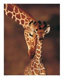 Żyrafka...