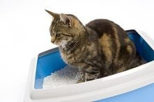 Jak nauczyć kota korzystać ...